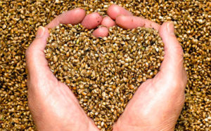 Lower Cholesterol Levels - Hemp Seed Products